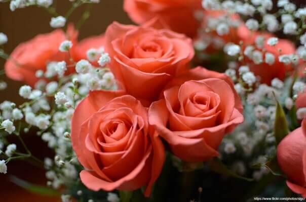 Blessed Botanicals Blog - 2020-02-02 - Season of Love Savings